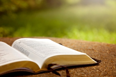 An Opened Bible on a Table in a Green Garden